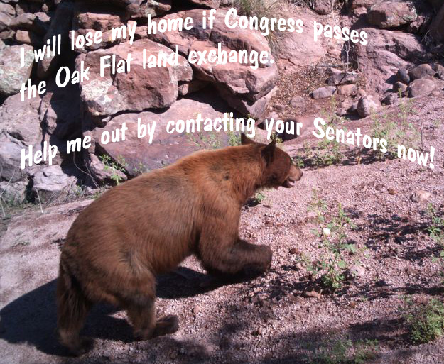 Black bear Senate plea