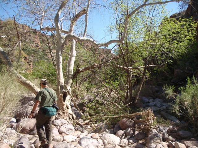 Gaan Canyon 004